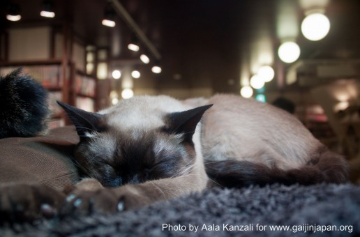 Cat Cafe in Ikebukuro: Let's do it again!!!