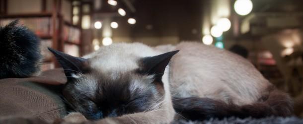 Cat Cafe à Ikebukuro: on remet ça !!!