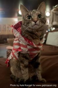 cat cafe in ikebukuro - tokyo with chisaki and yuki - cat in dress