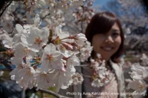 hanami - sakura at Yoyogi PArk Tokyo with Go Go nihon Japan - japanese girl & sakura