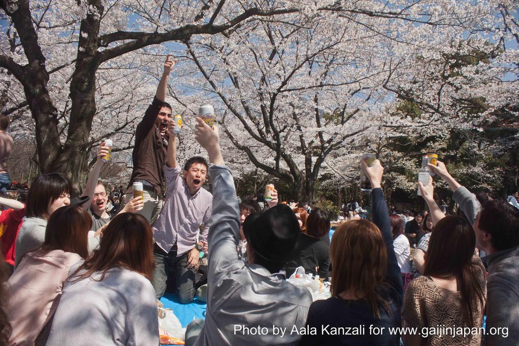 hanami - sakura at Yoyogi PArk Tokyo with Go Go nihon Japan - kanpai