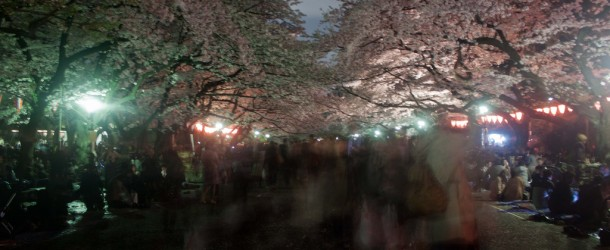 O hanami: the Sakura by night at Ueno Park