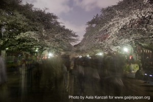 sakura @ ueno park tokyo moving 300x200 O hanami: the Sakura by night at Ueno Park