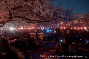 sakura @ ueno park tokyo night event 300x200 O Hanami : les Sakura de nuit à Ueno Park