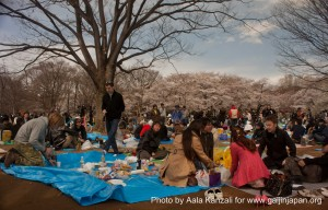 sakura hanami at yoyogi koen tokyo japan april 7 2012 meetup group 300x192 O Hanami: Sakura et fleur de cerisier à Yoyogi Koen