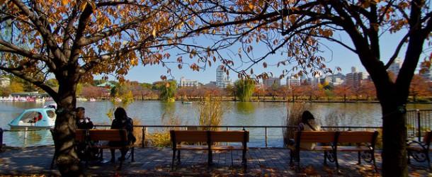 Momiji et Ginkgo au Japon : où les admirer