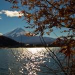 Mont Fuji - Kawaguchiko - feuilles d'érables