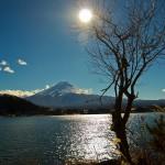 Mont Fuji - Kawaguchiko - soleil et arbre