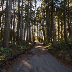 Tokyo Nikko Toshogu à pieds - forêt