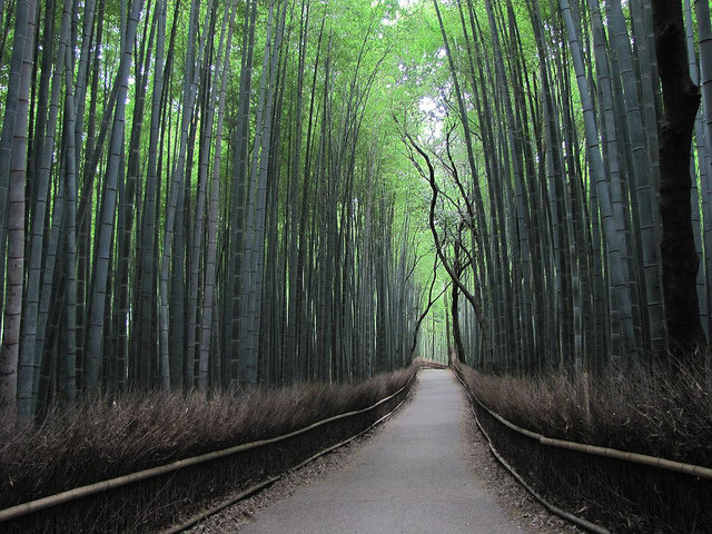 Arashiyama - photo par Isaac Bordas sur flickr