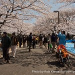 Parc Yoyogi à Tokyo - sakura