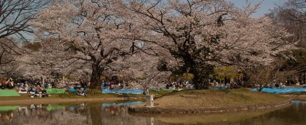 Parc Yoyogi à Tokyo, le parc où sortir