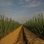 tokyo fukushima à pied - dans l'herbe