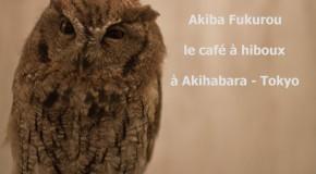 Akiba Fukurou – hibou café à Akihabara, Tokyo