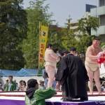 Nakizumo ou Naki Sumo au Japon (6)