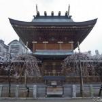 Ume, la fleur de prunier du Japon et sa floraison (9)