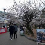 Yushima Tenjin Tenmangu à Tokyo (29)