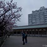 Yushima Tenjin Tenmangu à Tokyo (9)