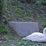 Zoo Asahiyama Hokkaido Japon (11)