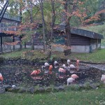 Zoo Asahiyama Hokkaido Japon (14)