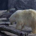 Zoo Asahiyama Hokkaido Japon (6)