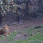 Zoo Asahiyama Hokkaido Japon (7)