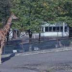 Zoo Asahiyama Hokkaido Japon (8)