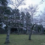 naritasan temple au Japon (19)