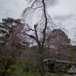 naritasan temple au Japon (7)