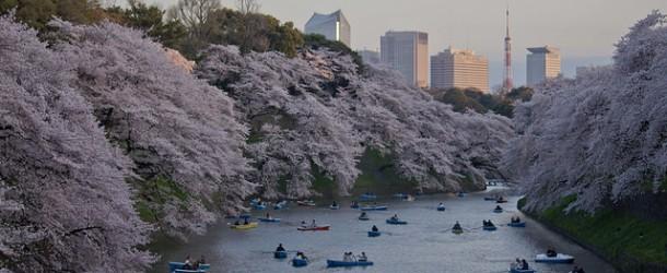 Chidorigafuchi à Tokyo, des sakura dans les douves