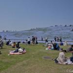 Hitachi Seaside Park Ibaraki (11)