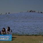 Hitachi Seaside Park Ibaraki (21)