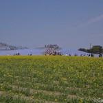 Hitachi Seaside Park Ibaraki (26)