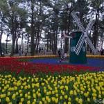 Hitachi Seaside Park Ibaraki (28)