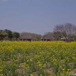 Hitachi Seaside Park Ibaraki (7)