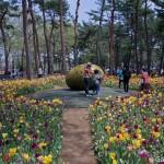 Hitachi Seaside Park Ibaraki (9)