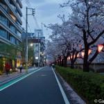 Megurogawa Sakura (7)