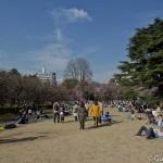 Parc Shinjuku Gyoen (17)