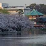 Parc Ueno Tokyo (30)