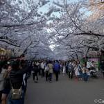 Parc Ueno Tokyo (32)