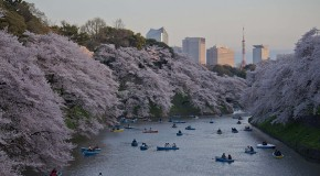 Mes Sakura 2015 en photos