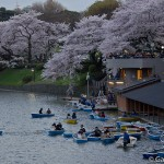 Sakura 2015 - Chidorigafuchi (10)