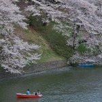 Sakura 2015 - Chidorigafuchi (11)
