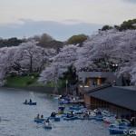 Sakura 2015 - Chidorigafuchi (12)