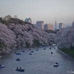 Sakura 2015 - Chidorigafuchi (14)