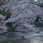 Sakura 2015 - Chidorigafuchi (18)