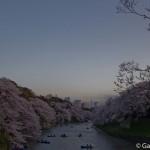 Sakura 2015 - Chidorigafuchi (4)