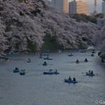 Sakura 2015 - Chidorigafuchi (7)