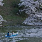 Sakura 2015 - Chidorigafuchi (8)