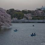Sakura 2015 - Chidorigafuchi (9)